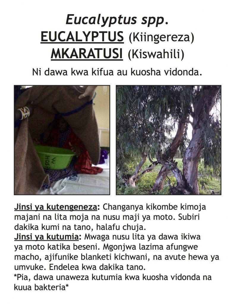 EucalyptusPoster